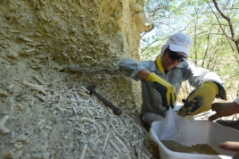 Mauro puts fine samples into a small bags for ear bones, sponge spicules or other microfossils.
