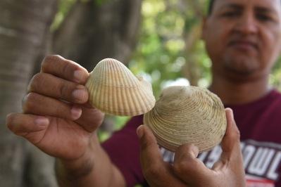 Felix w molluscs (2 of 2)