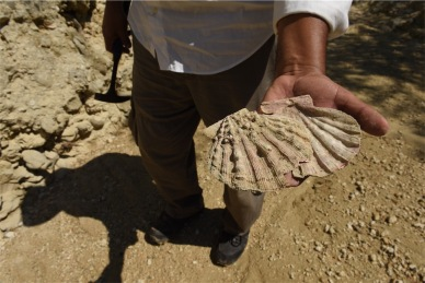 Fossil shots_p2 (1 of 2) 1